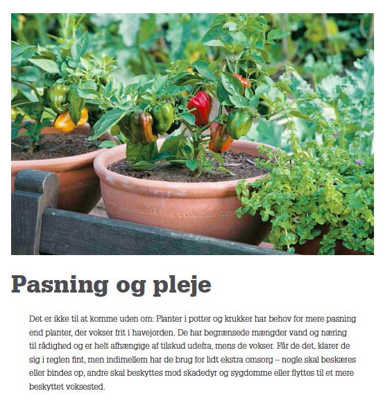 dyrk din køkkenhave i krukker side 5